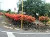 2004_0225hawaii2-20040034