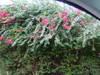 2005_0926hawaii200510225