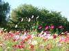 2005_1121hawaiikomono0005