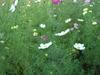 2005_1121hawaiikomono0010