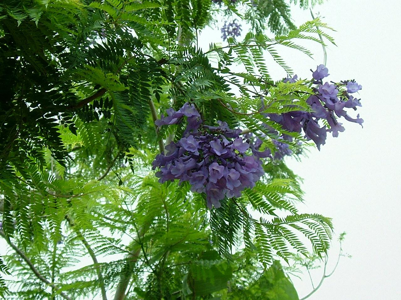 2008_0510hawaii200840456