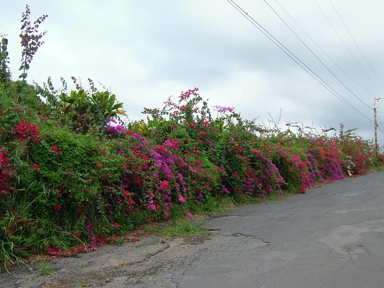 Hawaii_20071_489